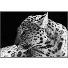 Декоративное панно Дикая кошка 134х196 (4 листа)