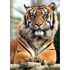 Фотообои DECOCODE Гордый тигр 21-0213-NY (200х280 см)