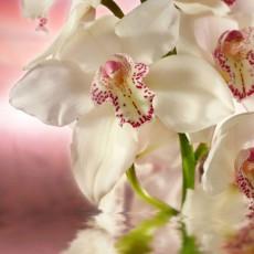 Декоративное панно Розовая орхидея 196х201 (6 листов)