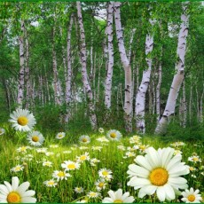 Декоративное панно Ромашковая поляна 196х201см (6 листов)