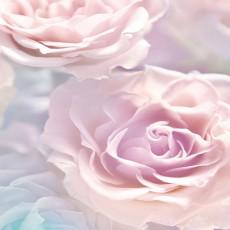 Фотообои Розовые розы Decocode 21-0146-FR (200х280см)