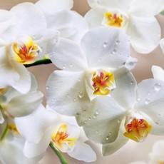 Декоративное панно Белая орхидея 196х134 (4 листа)