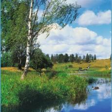 Декоративное панно Русская природа 196х201  (6 листа)
