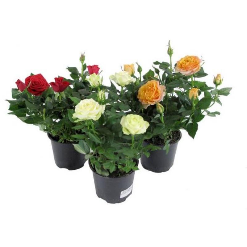 Цветы онлайн магазин цветов в горшках спб, букет марта